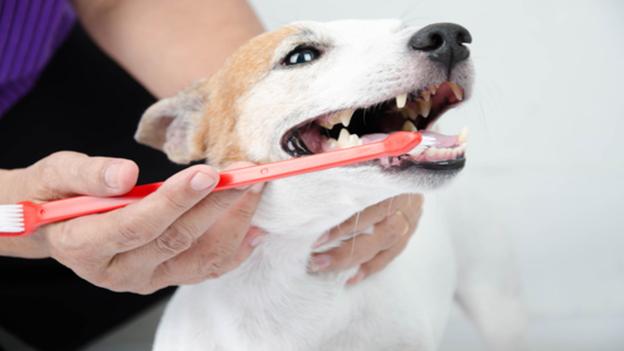 pet dental hygiene tips from palomar animal hospital in vista ca
